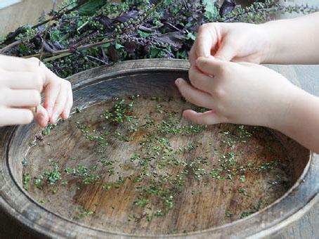 穂紫蘇の醤油漬け